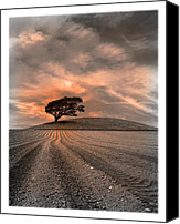 Ploughed Canvas Prints - Dusk Tree Canvas Print by Mal Bray