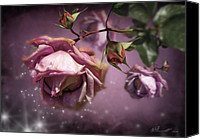Close Up Mixed Media Canvas Prints - Dusky Pink Roses Canvas Print by Svetlana Sewell