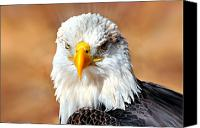 Marty Koch Canvas Prints - Eagle 21 Canvas Print by Marty Koch
