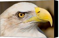 Bald Eagle Canvas Prints - Eagle Eye Canvas Print by William Jobes
