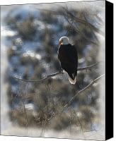 Bald Eagle Canvas Prints - Eagle in Tree 2 Canvas Print by Ernie Echols