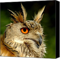 Bird Of Prey Canvas Prints - Eagle Owl Canvas Print by Photodream Art