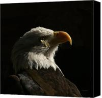 Bald Eagle Canvas Prints - Eagle Profile 4 Canvas Print by Ernie Echols