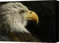 Bald Eagle Canvas Prints - Eagle Profile Painterly Canvas Print by Ernie Echols