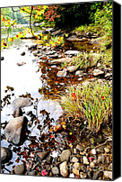 Williams Canvas Prints - Early Fall River Canvas Print by Thomas R Fletcher