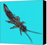 Insects Painting Canvas Prints - Earwig Canvas Print by Jude Labuszewski