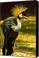 Crane Canvas Prints - East African Crowned Crane Pose Canvas Print by Bill Tiepelman
