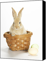 Easter Rabbit Photo Canvas Prints - Easter Bunny In Basket Canvas Print by American Images Inc