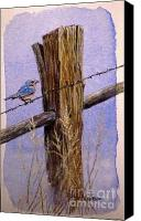 American Midwest Painting Canvas Prints - Eastern Blue Bird Canvas Print by David Ackerson