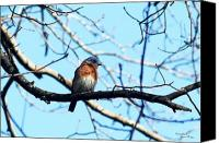 Signed Digital Art Canvas Prints - Eastern Bluebird 5766-I Canvas Print by Suzanne  McClain