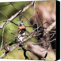 Signed Digital Art Canvas Prints - Eastern Bluebird and Friends  5751-I Canvas Print by Suzanne  McClain