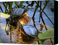 Pond Canvas Prints - Eastern Painted Turtles Canvas Print by Bob Orsillo