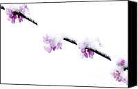 Solitude Canvas Prints - Eastern Redbud with Spring Snow Canvas Print by Thomas R Fletcher