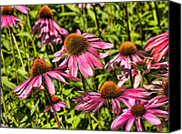 Cone Flowers Canvas Prints - Echinacea Garden Canvas Print by Bonnie Bruno