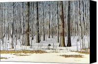Egg Tempera Canvas Prints - Edge of the Forest Canvas Print by Conrad Mieschke