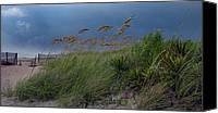 Beach Photos Canvas Prints - Edisto Oat Fields Canvas Print by Skip Willits