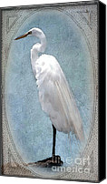 Great Egret Canvas Prints - Egret 2 in a Vintage Frame Canvas Print by Betty LaRue