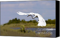 Bank Canvas Prints - Egret Ballet Canvas Print by Mike  Dawson