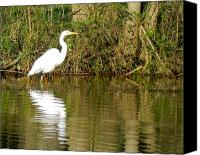 Don L Williams Canvas Prints - Egret Canvas Print by Don L Williams