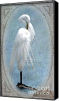 Great Egret Canvas Prints - Egret In a Vintage Frame Canvas Print by Betty LaRue