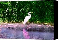Great Egret Canvas Prints - Egret Who has Nothing to regret Canvas Print by Bill Cannon