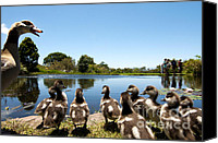 Waterfowl Canvas Prints - Egyptian geese Canvas Print by Fabrizio Troiani