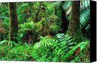 Puerto Rico Photo Canvas Prints - El Yunque Lush Vegetation Canvas Print by Thomas R Fletcher