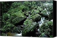 Puerto Rico Photo Canvas Prints - El Yunque National Forest Rocks and Waterfall Canvas Print by Thomas R Fletcher