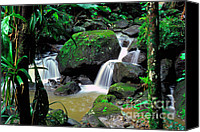 Lush Vegetation Canvas Prints - El Yunque National Forest Waterfall Canvas Print by Thomas R Fletcher