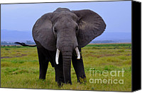 Wildlife Glass Special Promotions - Elephant in the Wild Canvas Print by Pravine Chester