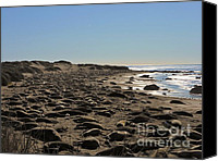 Cambria Photo Canvas Prints - Elephant Seals in the Masses Canvas Print by Benjamin Stevenson