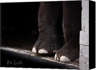 Animal Photo Canvas Prints - Elephant Toes Canvas Print by Bob Orsillo