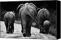 Black Canvas Prints - Elephants in black and white Canvas Print by Johan Elzenga