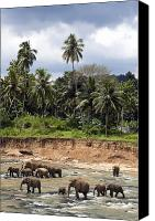 Elephants Canvas Prints - Elephants in the river Canvas Print by Jane Rix