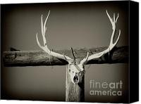 Elk Canvas Prints - Elk and Blackbird Ranch Gate Canvas Print by Gus McCrea
