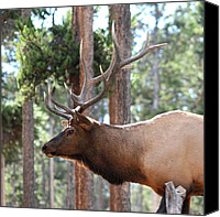 David Dunham Canvas Prints - Elk Profile 2 Square Canvas Print by David Dunham