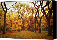 Trees Canvas Prints - Elm Trees - Autumn - Central Park Canvas Print by Vivienne Gucwa