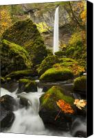 Fall Leaves Canvas Prints - Elowah Autumn Canvas Print by Mike  Dawson
