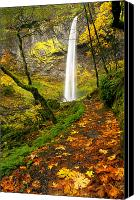 Autumn Leaves Canvas Prints - Elowah Autumn Trail Canvas Print by Mike  Dawson