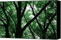 Bathrooms Canvas Prints - Emerald Forest Canvas Print by Steven Milner