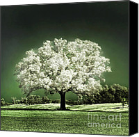 Tree Canvas Prints - Emerald Meadow square Canvas Print by Hugo Cruz