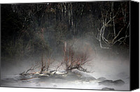 Nature Photo Canvas Prints - Emergence Canvas Print by Skip Willits