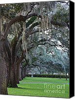 Live Oaks Canvas Prints - Emmet Park in Savannah Canvas Print by Carol Groenen