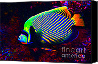 Angel Fish Canvas Prints - Emperor Angelfish Canvas Print by Wingsdomain Art and Photography
