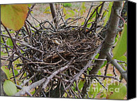 Little Birds Canvas Prints - Empty Bird Nest - Photography Canvas Print by Rebecca Anne Grant
