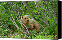 Kodiak Canvas Prints - Enchanted  Canvas Print by Dennis Blum