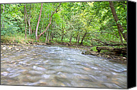 Cedar Canvas Prints - Enchanted Stream Canvas Print by East Coast Barrier Islands Betsy A Cutler