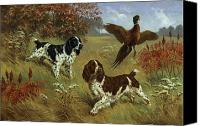 Outdoors Canvas Prints - Energetic English Springer Spaniels Canvas Print by Walter A. Weber