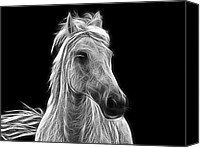 Energetic Canvas Prints - Energetic White Horse Canvas Print by Joachim G Pinkawa
