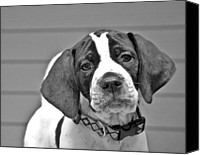 Susan Leggett Digital Art Canvas Prints - English Pointer Puppy Black and White Canvas Print by Susan Leggett
